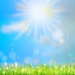 Summer grass in sun light. EPS 10