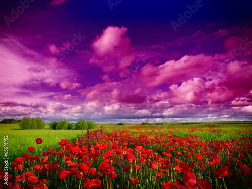 природа поле цветы облака деревья скачать