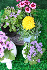 Flowers in  decorative pots on green grass background