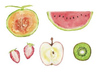 いろいろな果物の断面