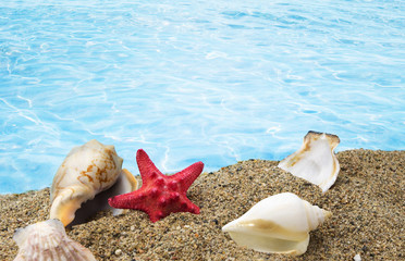 Shells on sand with clear blue water background
