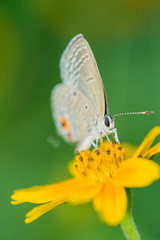 isolated butterfly on the flower