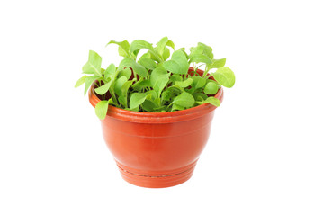 Pot with green plant.