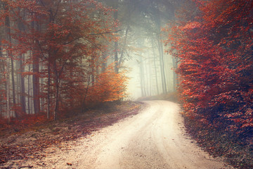 Wall Mural - Dreamy forest road
