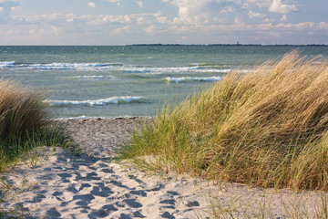 Fototapete - Dünenlandschaft am Strand der Ostsee bei Heiligenhafen
