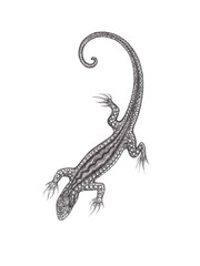 The drawn lizard on a white background in the style of pointilli