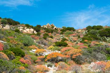 Mediterranean vegetation