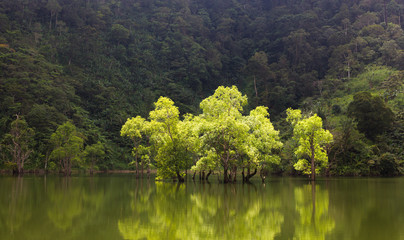 Green trees on the lake