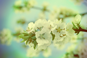 Beautiful blooming branches, close-up