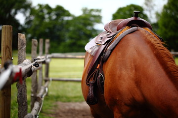 gesatteltes Pferd auf Koppel