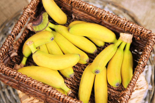 Bunch of mini bananas in wicker box on sackcloth background