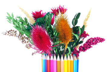 Beautiful flowers in colorful pencils vase isolated on white