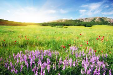 Spring meadow in meadow.