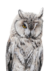 Fototapete - light gray owl on white background