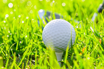 golf ball and putter on the field