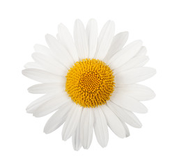Photo sur Aluminium Marguerites White daisy