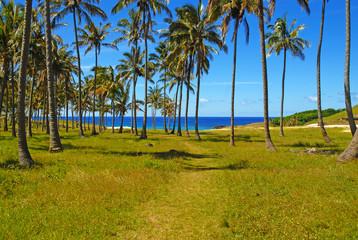 Palm Trees on Beach, Polynesia