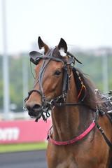 cheval de courses