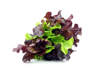 Fresh lettuce Lollo isolated on white background