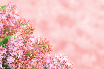 Background with pink lilac