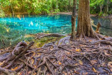 Emerald blue Pool. Krabi, Thailand