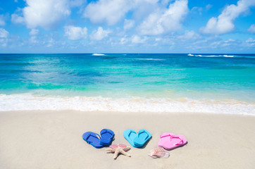 Flip flops, seashell and starfish