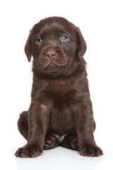 Cute Labrador puppy portrait