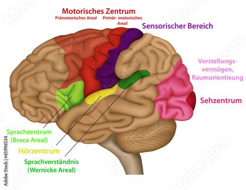 Funktionsbereiche des menschlichen Gehirns\