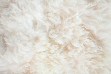 sheep wool background