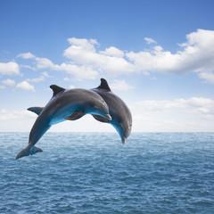 Photo sur Plexiglas Dauphin two jumping dolphins
