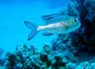 Unterwasserwelt rotes Meer