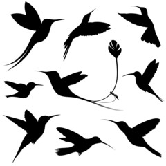 hummingbirds vector set