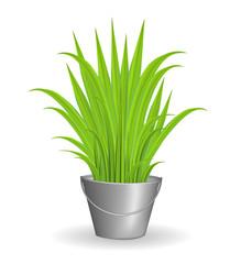 Green grass in an iron bucket