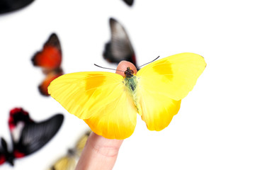 Beautiful butterflies on finger, isolated on white