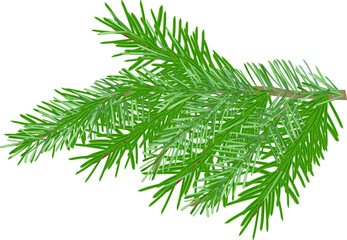 single green fir branch isolated on white