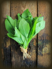 Vintage photo of spinach