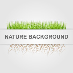 Abstract nature background. Green grass.