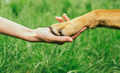 Dog paw and human hand are doing handshake