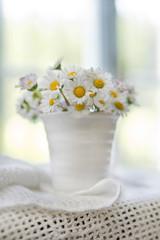 The small daisy field