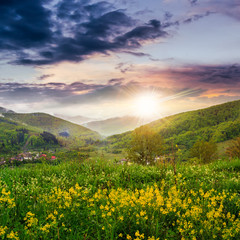 flowers on hillside meadow in mountain at sunset
