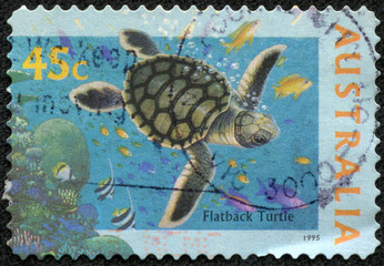 Stamp printed in AUSTRALIA shows the Flatback Turtle