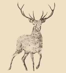 deer engraving style, vintage illustration