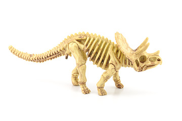 Triceratops fossil  skeleton model toy.
