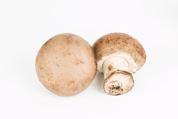 Fresh mushroom.