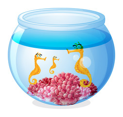 A jar with three seahorses