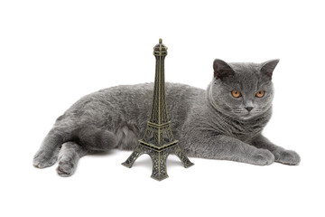 Gray Cat and Eiffel Tower on a white background
