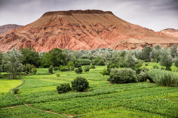 Boumalne Dades,  Morocco, Africa,  North Africa,  scenery fields