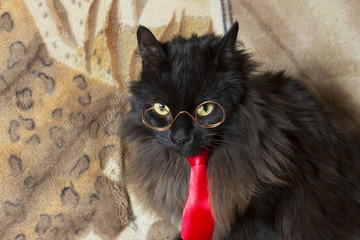 cat and red tie