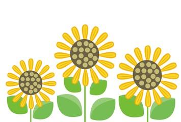 夏の花の黄色のひまわり3本