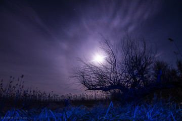 tree -in blue light at night full moon halo,stars and mystyc la
